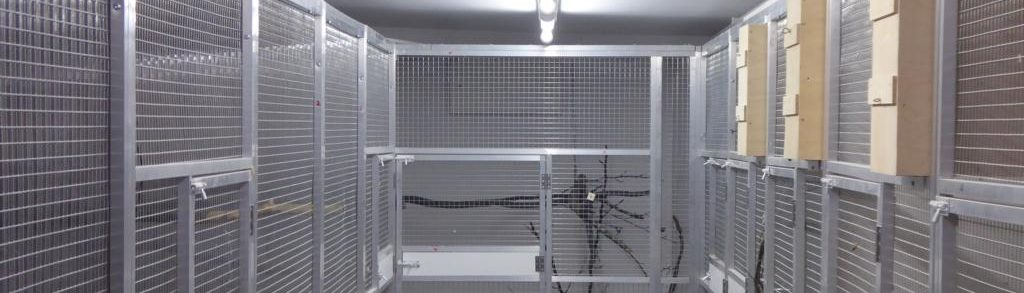 Naumann-Technik